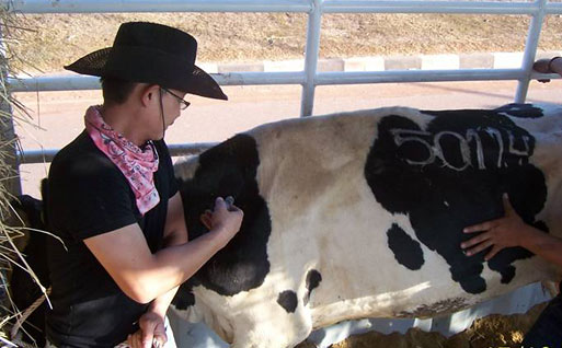 Artificial Insemination in Cattle.jpg